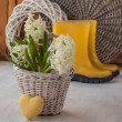 White hyacinths in a basket and heart — Stock Photo