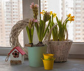 Pink hyacinth and daffodils on the window — Stock Photo