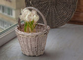 White crocus in a basket — Stock Photo