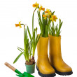 Yellow daffodils and rubber boots — Stock Photo