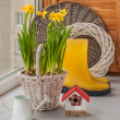 Yellow daffodils in a basket — Stock fotografie