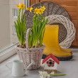 Daffodils in a basket and hyacinth — Stok fotoğraf