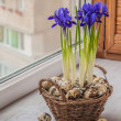 Постер, плакат: Irises in a basket