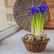 Постер, плакат: Irises and quail eggs in a basket