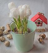 Birdhouse and spring crocus — Stock Photo