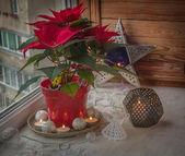 Poinsettia on the window — Stock Photo