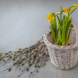 Daffodils in a basket — Stock Photo #42394963