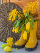 Mimosa and tulips in yellow boots — Stockfoto