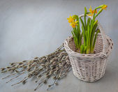 Daffodils in a basket — Stock Photo