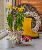 Yellow daffodils in a basket — Stock Photo