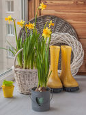 Yellow daffodils and rubber boots  — Stockfoto