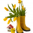 Yellow daffodils and tulips — Stock Photo