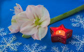 Hippeastrum next to a candle — Foto de Stock