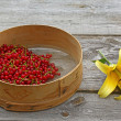 Sieve with freshly picked red currant berries and yellow lily — Stock Photo
