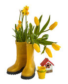 Yellow daffodils, tulips and rubber boots isolated — Stock Photo