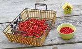 Summer still-life with currant berries and decorative starling h — Stock Photo