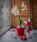 Pink hippeastrum next to a burning candle. Eve Advent — Stock Photo