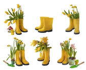 Set 6 pair of yellow gumboots and daffodils, tulips, mimosa  iso — Stock Photo