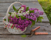 Lilac and secateurs — Foto Stock