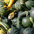 Green Gourds - Stock Photo
