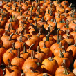 Pumpkins 1 - Stock Photo