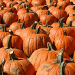 Pumpkins 3 - Stock Photo