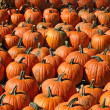 Pumpkins 2 - Stock Photo