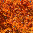 Stock Photo: Foliage 2