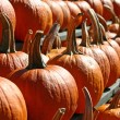 Pumpkins 5 - Stock Photo