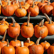 Pumpkins 6 - Stock Photo