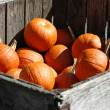 Crate of Pumpkins - Stock Photo