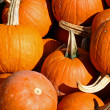 Stock Photo: Pumpkins 8