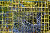 鋼のイセエビのトラップ — ストック写真