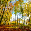 Stock Photo: Colorful autumn forest