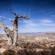 Stock Photo: Parched tree in the desert landscape