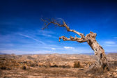 Parched tree in the desert landscape — Stock Photo