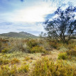 Tree near sand dunes in the desert, Spain, Andalusia, Almeria - 