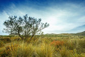 Tree near sand dunes in the desert, Spain, Andalusia, Almeria — Stock Photo