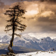 Single tree and JuliAlps — Stock Photo #20041589