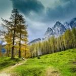Alps mountains in northern Slovenia — Stock Photo