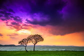 Sunset with tree — Stock Photo