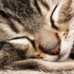 Sleeping cat — Stock Photo #20051461