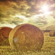 Stock Photo: Field with high bale