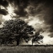 Lonely Tree — Stock Photo #20055911