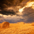 Stock Photo: Field with hay bale