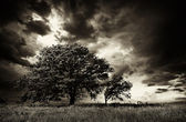 Lonely Tree — Stock fotografie