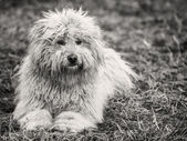 White dog — Foto de Stock