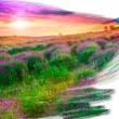 Foto Stock: Artist brush painting picture of beautiful landscape