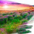 Artist brush painting picture of beautiful landscape — Stock Photo #20144813