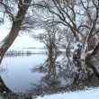 Winter landscape river Zagyva in Hungary — Stock Photo